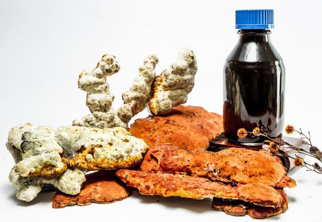 牛樟芝(子實體+固態菌絲體)萃取液 2